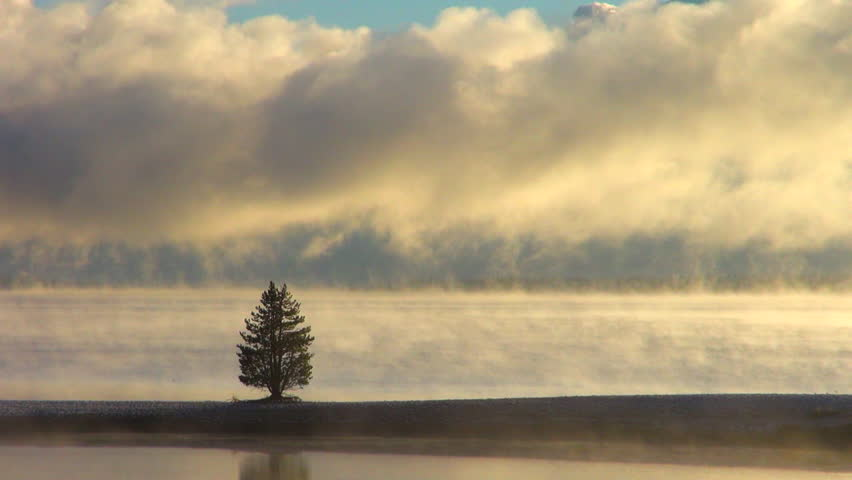 48118d341babc Time Lapse  Lone Tree Standing Stock Footage Video (100% Royalty ...