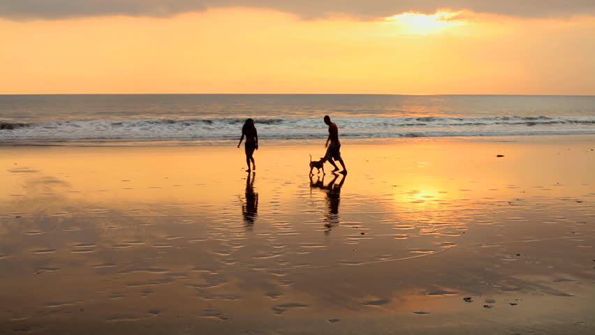 Image result for free images couple walking a dog on the beach