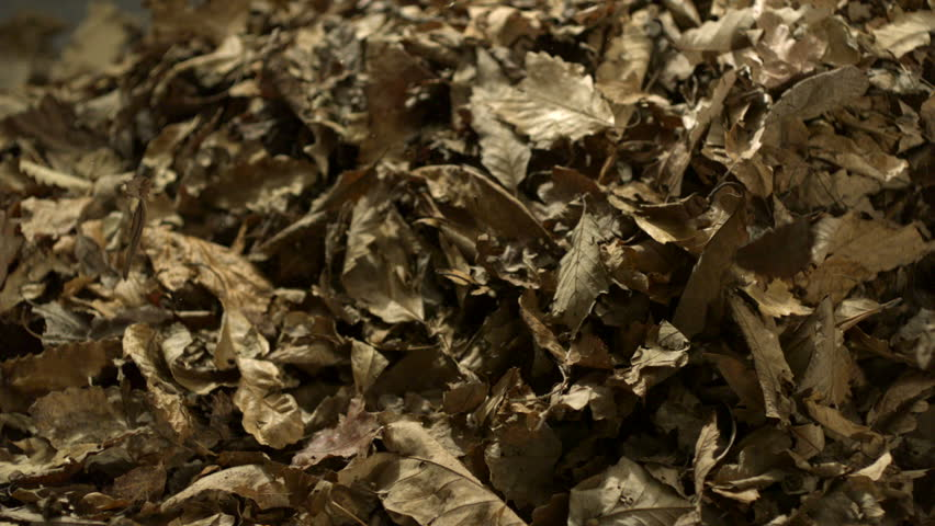 Dried leaves falling on black background shooting with high speed camera, phantom flex. | Shutterstock HD Video #3579422