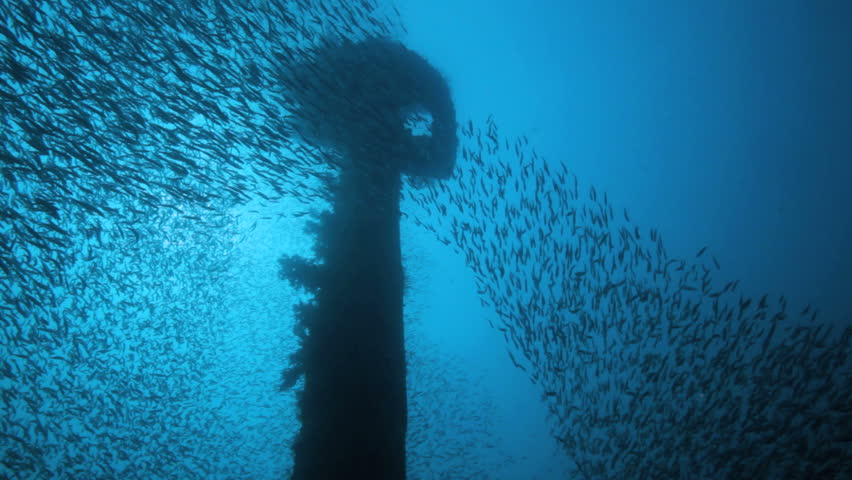 shoal of Bait fish inside the ship wreck