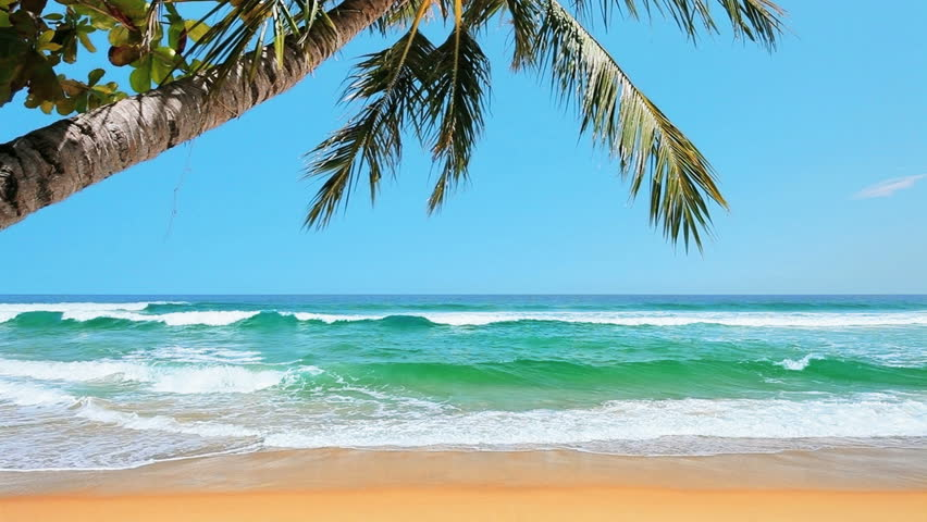 Tropical beach in sunny day #3683705
