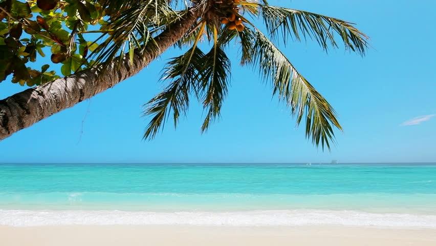 Tropical Paradise Beach Coast Sea Blue Emerald Ocean Palm: Tropical Island Vacation Idyllic Background. Exotic Sandy