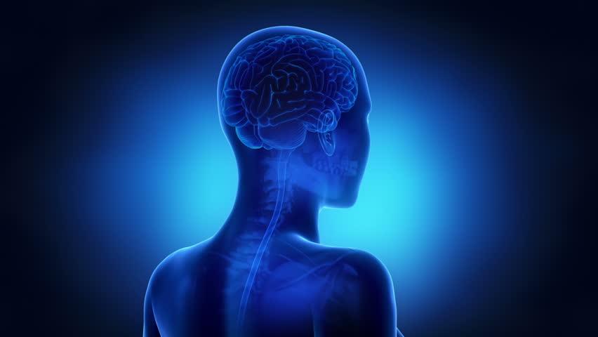 Stock Video Of Woman Brain Anatomy 3705449 Shutterstock