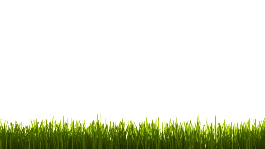 growing grass animation stock footage video 5146496