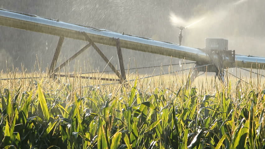 Sprinkler Irrigating Corn Field. Watering a corn field in the early morning in the Okanagan Valley, British Columbia, Canada.
