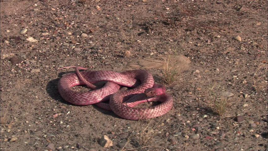 Follow a snake moving quickly along the ground