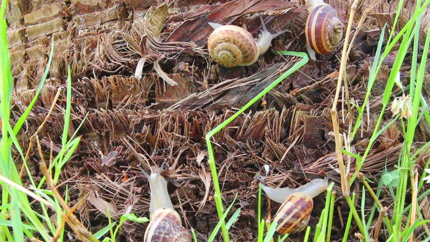 snails in grass