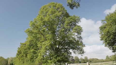 Timelapse of tree growing leaves, Wiltshire,England
