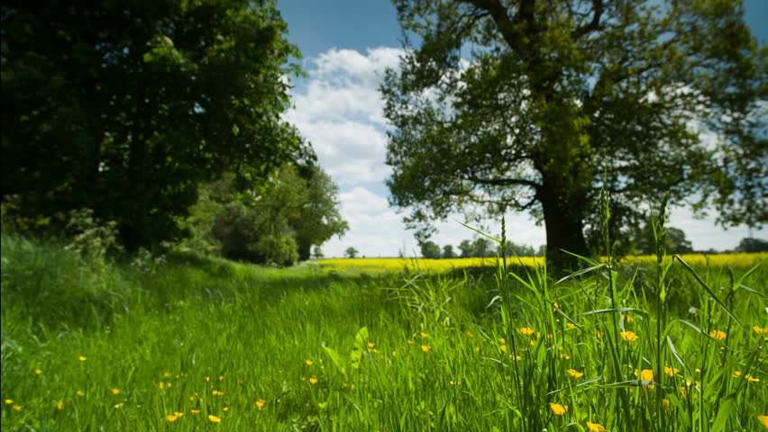 beautiful tree in an english countryside meadow during summer. This is shot with 14bit raw video from canon's d5 mk3
