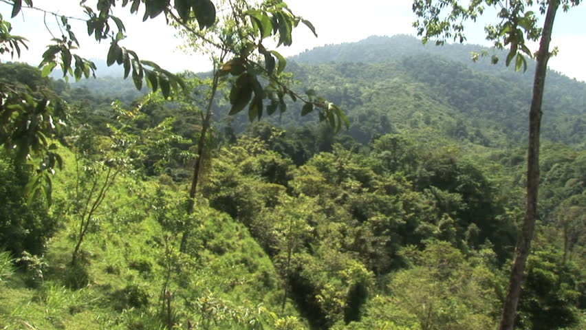 Pan shot of the mountainous  tropical rain forest in Costa Rica