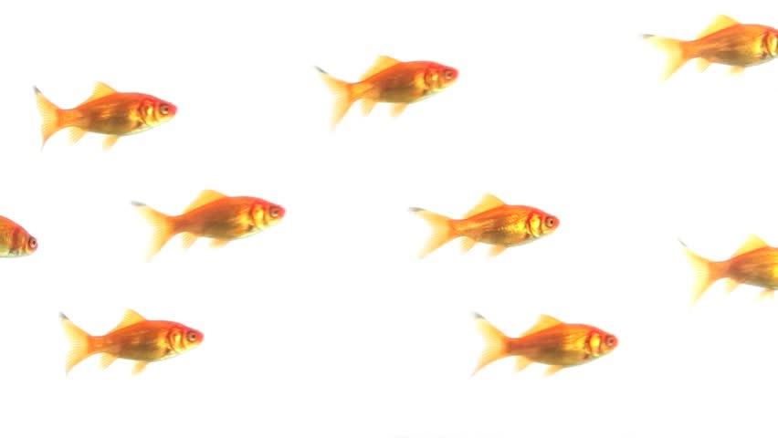 Group of Goldfish | Shutterstock HD Video #4124728