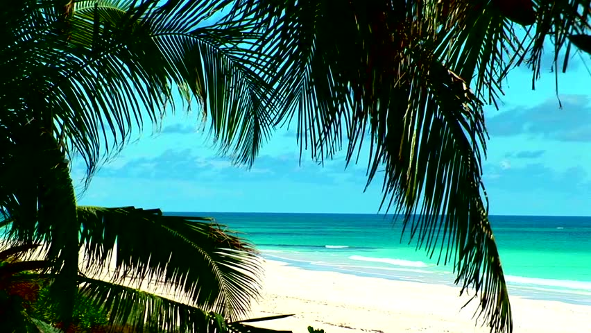 Bahamas outer island beach with palm tree in the foreground and pristine white sand beach