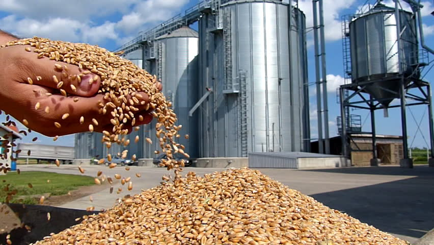 Wheat in a hand after good harvest, slow motion, in a background agricultural silo
