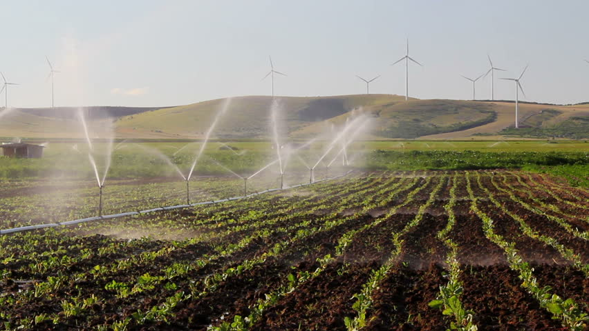 Sprinkler irrigation with turbines in the background ...