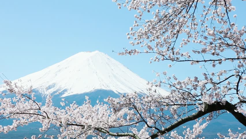 Mt Fuji With Cherry Blossom Stock Footage Video 100 Royalty Free 4346162 Shutterstock