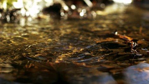 Water drop making ripple in creek shooting with high speed camera, phantom flex.