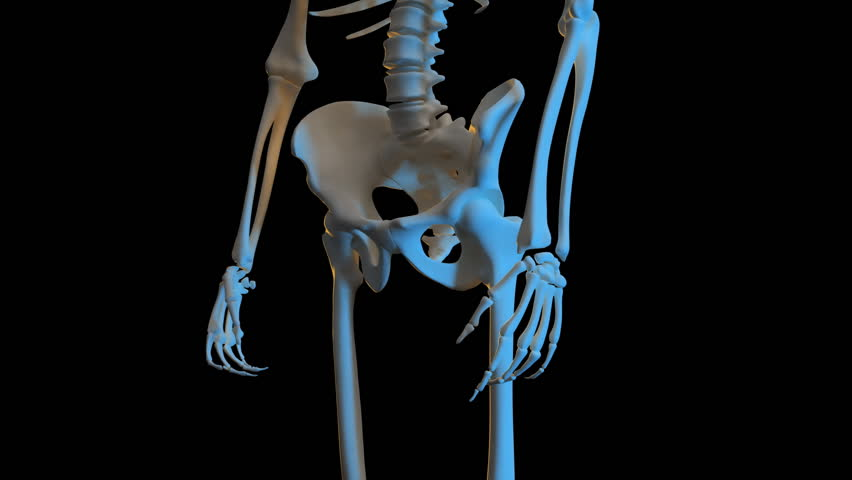 complete close-up view of the skeletal system. 3d animation of a, Skeleton