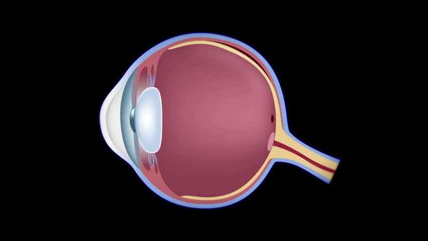 Stock Video Of Human Eye Anatomy And Common Eye 1960576 Shutterstock
