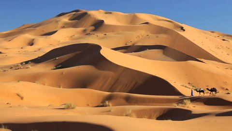 Local Touareg trader with a camel caravan traveling across the hostile terrain of the Sahara Desert, Morocco, Africa