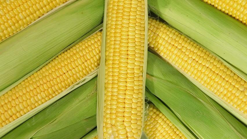 DOLLY: Row of Fresh Sweet Corn | Shutterstock HD Video #4639352