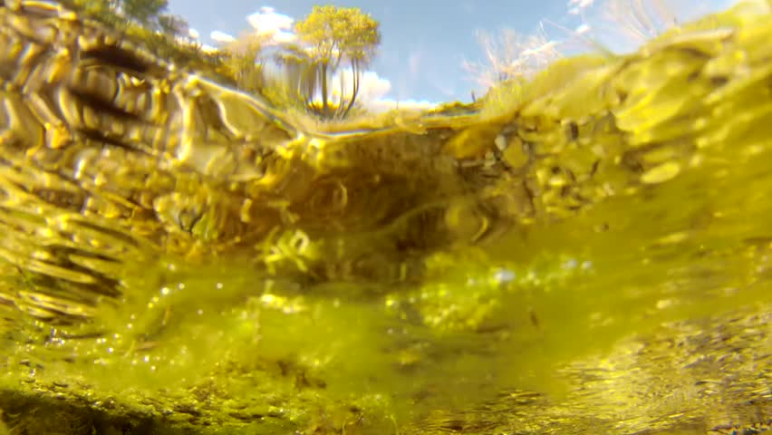 A beautiful clear ground spring with vegetation called Cascade Springs #4731782