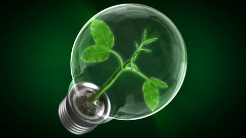 Green Energy Concept. Pure Energy. Tree growing inside a light bulb.