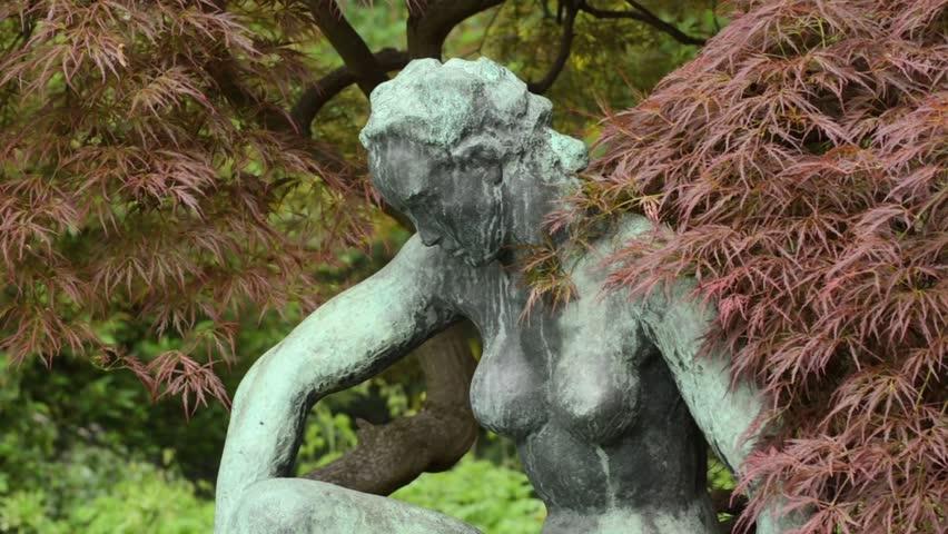 Japanese Maple Acer Palmatum Dissectum Stock Footage Video