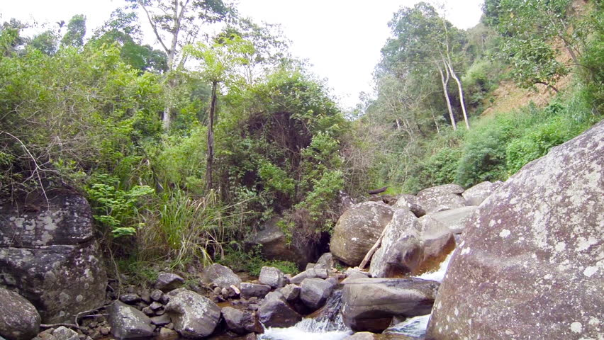 Video 1080p - Small fishes in the muddy water of a mountain stream. Sri Lanka