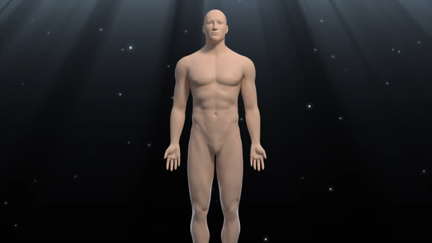 Anatomical 3d human male body on black illuminated galaxy background fly through intestine and zoom to hd living cell showing healthy nucleus