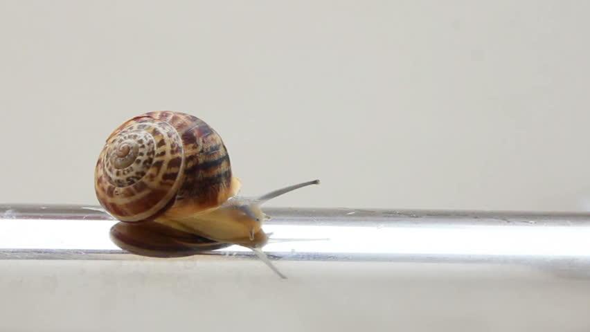 snail moving on metal tube