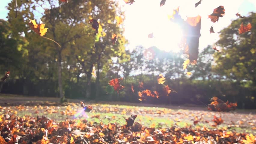 autumn leaves falling in slow motion. colorful fall season. 1920x1080 hd | Shutterstock Video #5000075