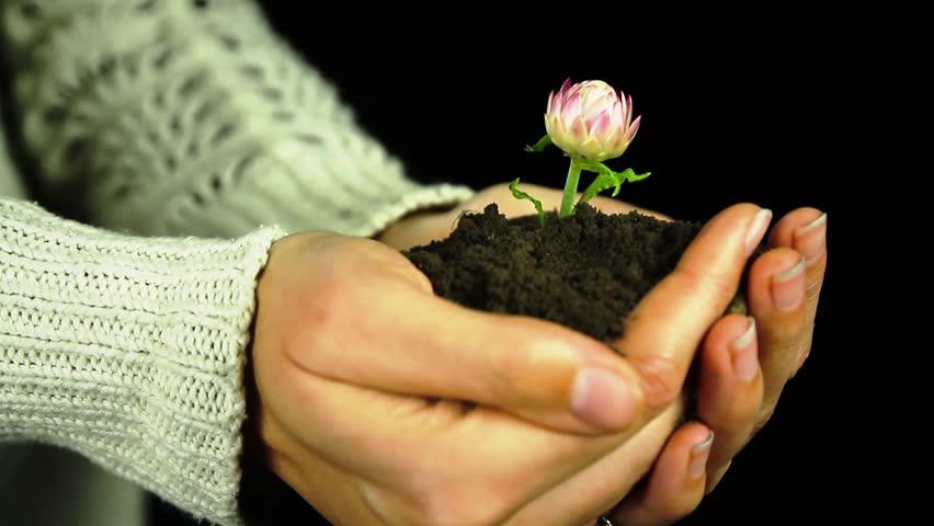 Αποτέλεσμα εικόνας για hands flower