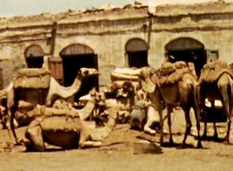 ADEN PROTECTORATE, CIRCA 1960: Camel herd ride market vintage. British Aden Protectorate in southern Arabia.  One of a kind private owned vintage and historic 8mm film. Republic of Yemen.