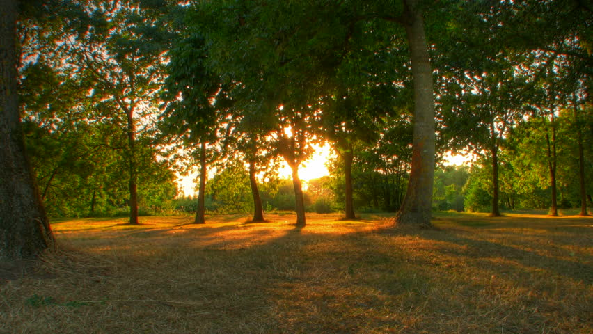 Sunset beams through trees in park, HD motorized time lapse clip, high dynamic