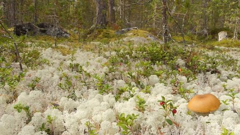dolly-shot of ground vegetation tundra