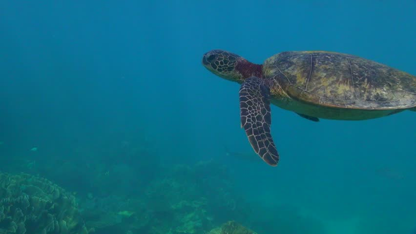 turtle from on top and close (Chelonia mydas) #5180222