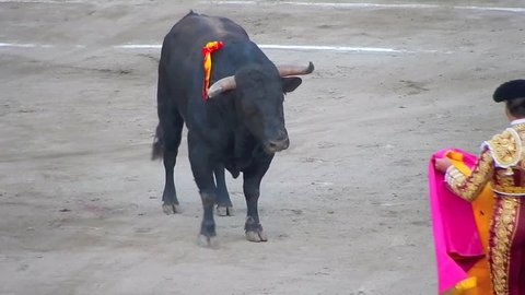 Spanish Fighting Bull. Toro de lidia. bullfight arena. Bullfighter