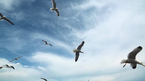 Seagulls flying