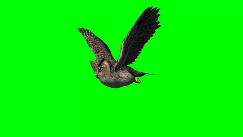 Owl in fly animal green screen video Footage