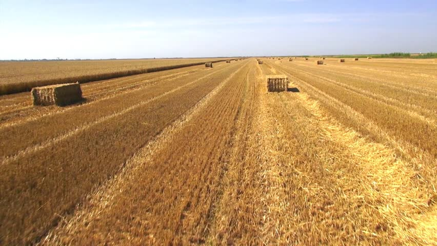 Wheat harvest, aerial view. | Shutterstock HD Video #5304842