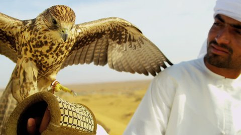 Portrait close up Saker falcon displaying wings tethered to Arabic male owners wrist close up shot on RED EPIC, 4K, UHD, Ultra HD resolution