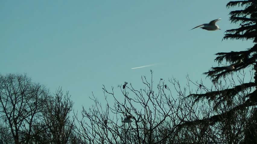 Birds fly past in the foreground while an aircraft leaves a vapor trail against