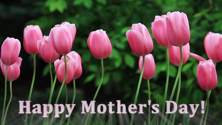 "Tall pink tulips sway in a gentle breeze with glowing ""Happy Mother's Day"" text. Looping."
