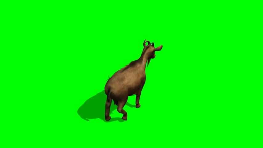 Goat walk - separated on green screen #5417162