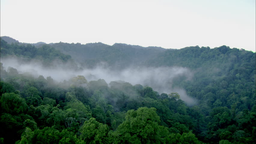 Aerial shot of a tropical rainforest. | Shutterstock HD Video #5432408