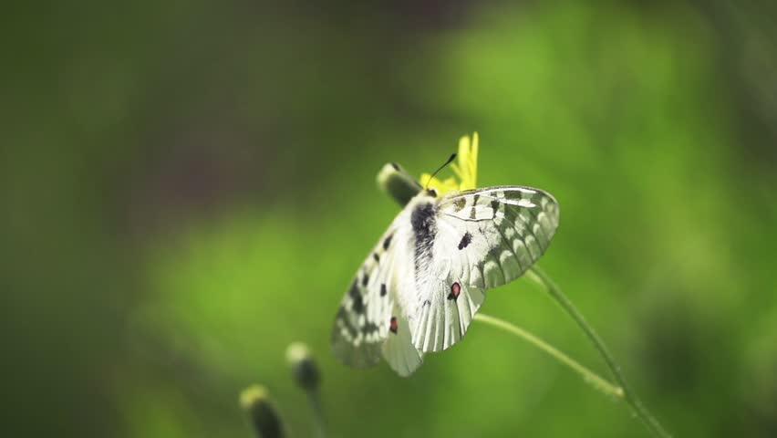 Butterfly flying away in super slow-motion