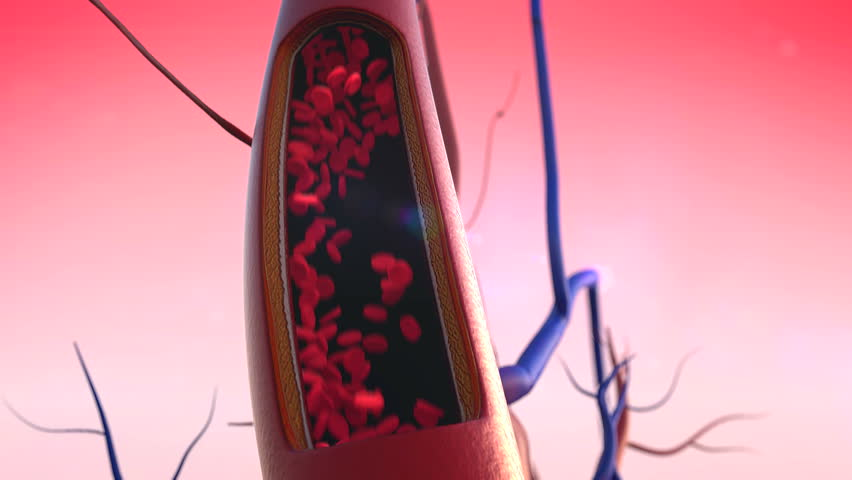 Artery, Blood Vessel, heart, artery shown with a cut out section,  High quality rendering with original textures and global illumination, Contraction of blood vessels