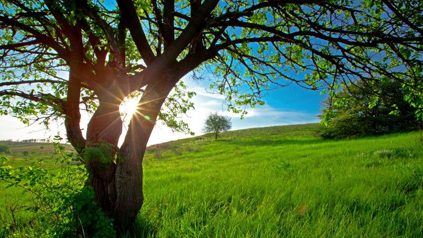 Summer landscape. 4K. FULL HD, 4096x2304. | Shutterstock HD Video #5559152