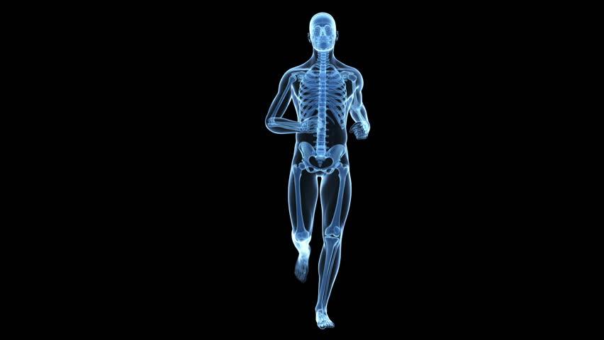 rotating female human skeletal structure, bone system, blue x-ray, Skeleton