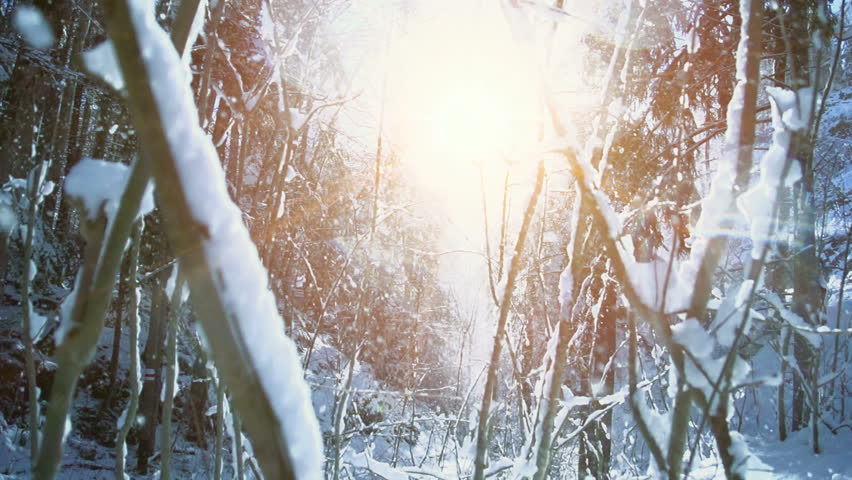 snow winter forest. trees woods. snowing snowy. sunset dusk sunshine. nature. slow motion. winter background. romantic wonderland. beautiful environment